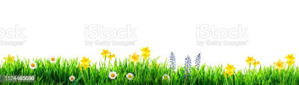 Grass and spring flowers background picture id1124465696?b=1&k=6&m=1124465696&s=612x612&h=rq lnn0nqiax9 mombtq2wvppeq9ozjpfpxui7ysc6a=