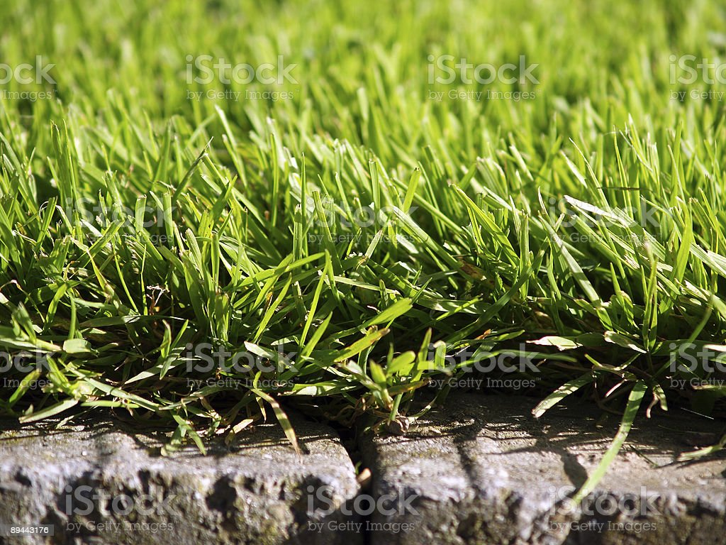 grass and stones royalty-free stock photo