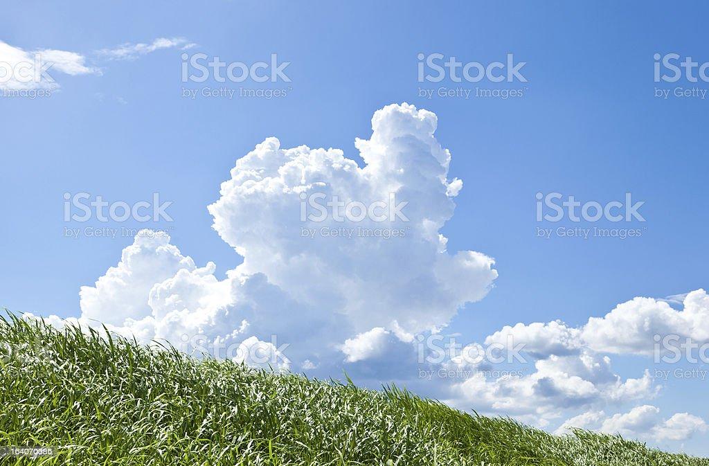 Grass and summer thunderhead royalty-free stock photo