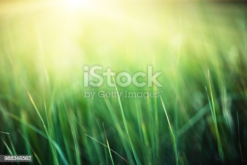Abstract grass and sun background