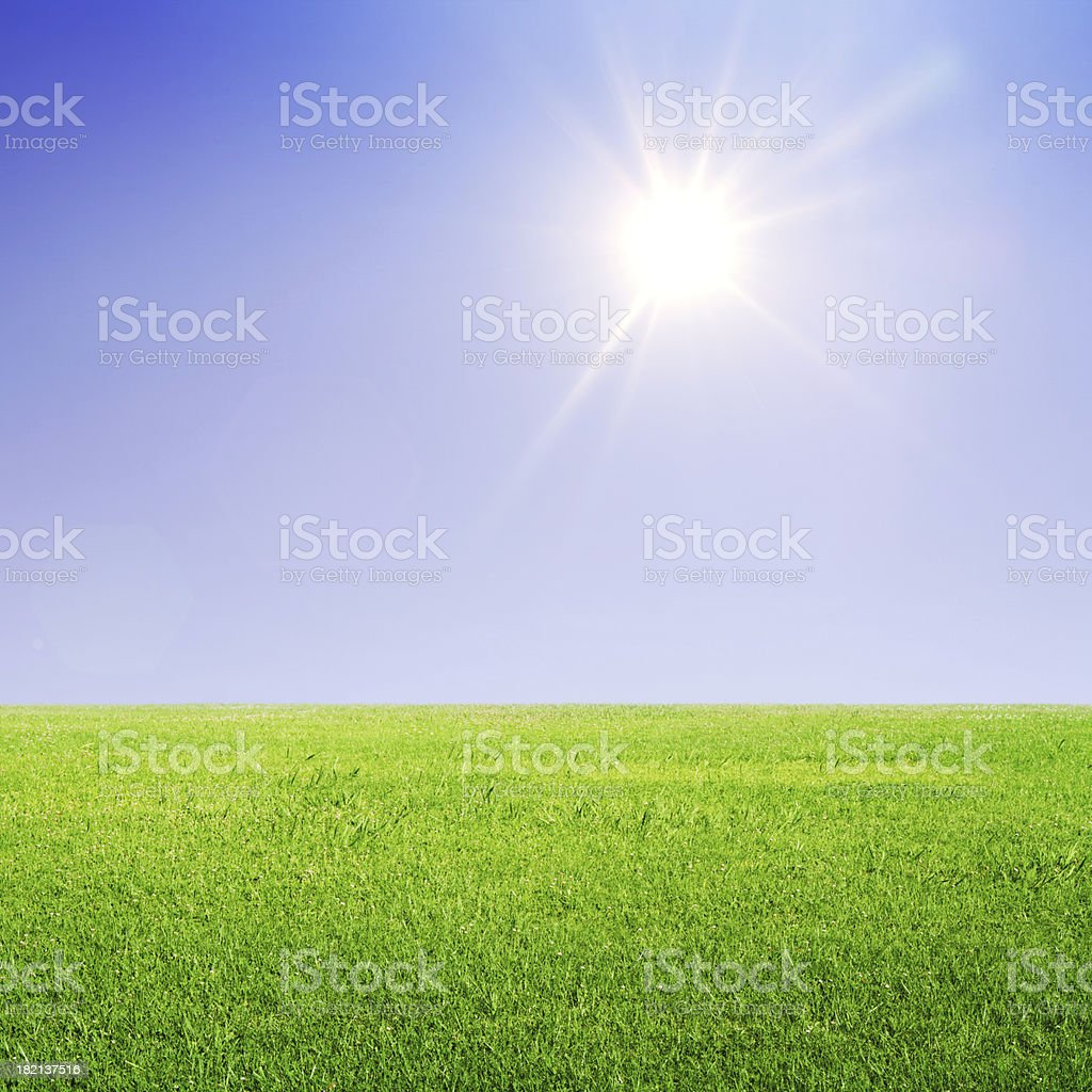 grass and sun royalty-free stock photo