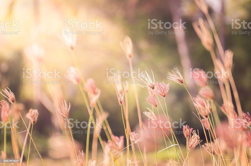 Hierba y el viento - foto de stock