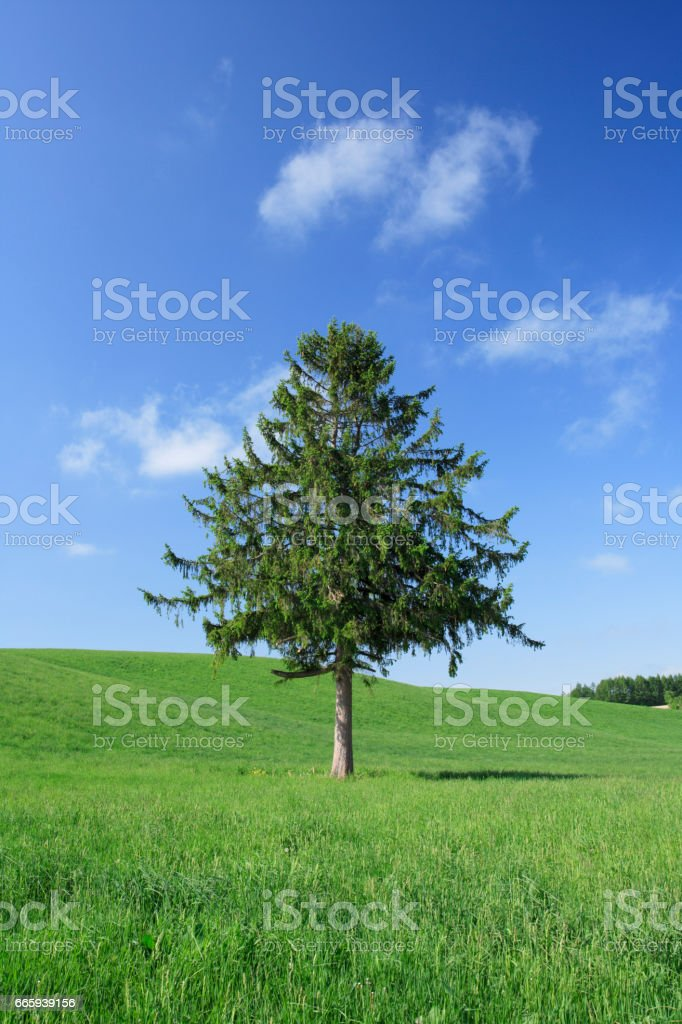 Grass and tree foto stock royalty-free