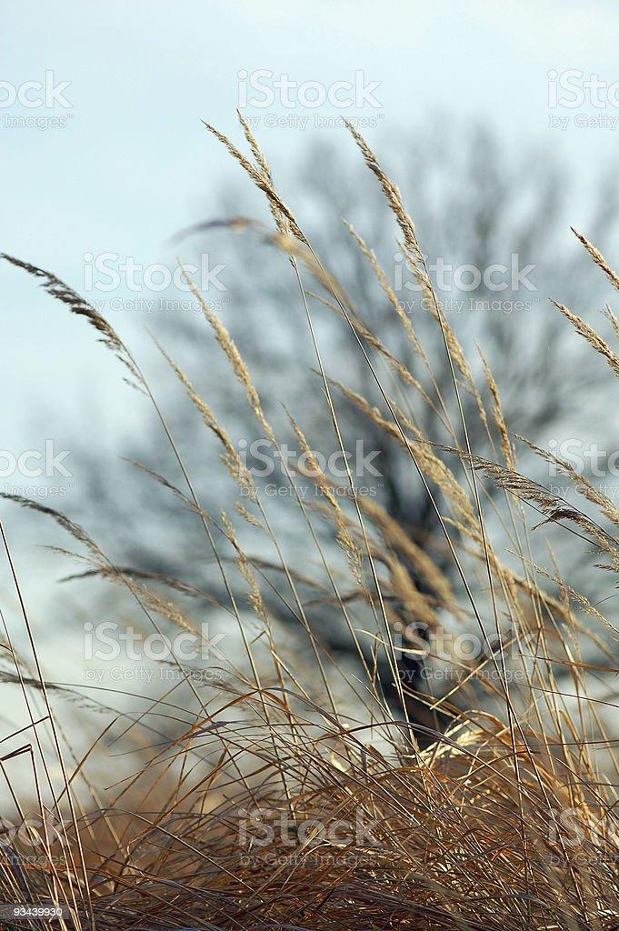 Gras und Baum Lizenzfreies stock-foto