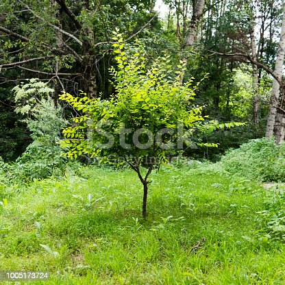 601026242istockphoto Grass and trees in public park 1005173724