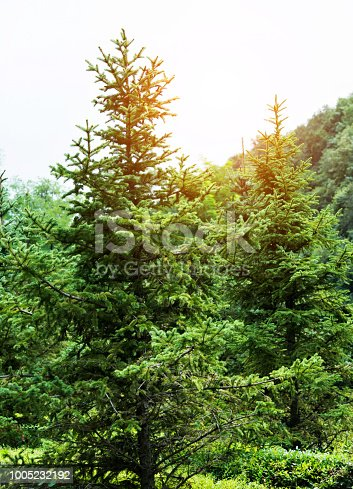 601026242istockphoto Grass and trees in public park 1005232192