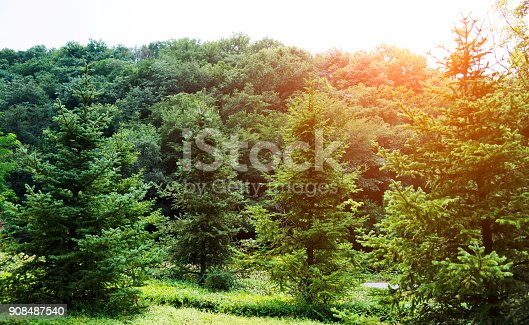601026242istockphoto Grass and trees in public park 908487540