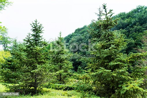 601026242istockphoto Grass and trees in public park 908487546