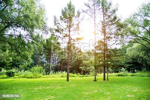 601026242istockphoto Grass and trees in public park 908635756
