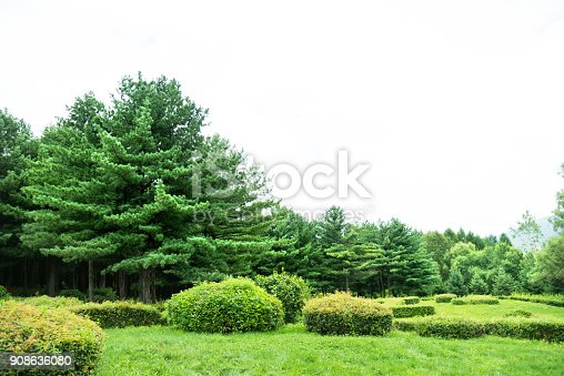 601026242istockphoto Grass and trees in public park 908636080