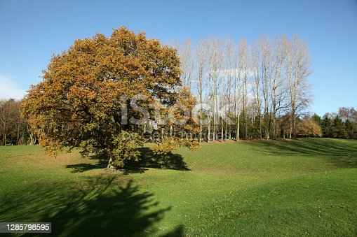 Sunny landscape of trees and grass in autumn.