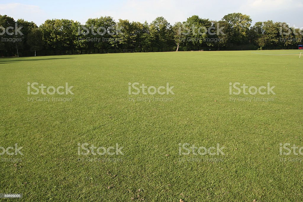 Grass and Trees royalty free stockfoto