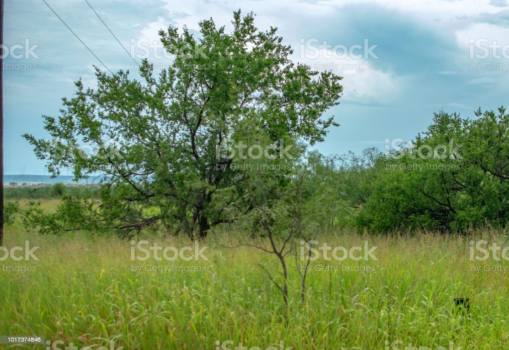 grass and trees with clouds Texas stock photo