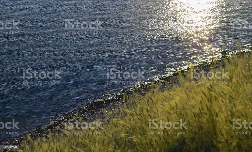 Grass and water royalty-free stock photo