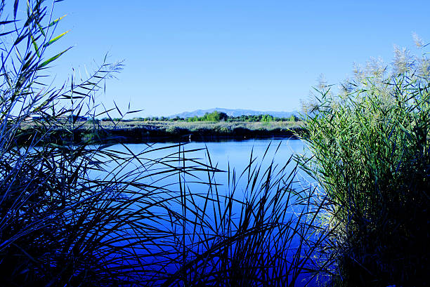Grass and Water, Wetlands Park, Las Vegas, Nevada, USA stock photo