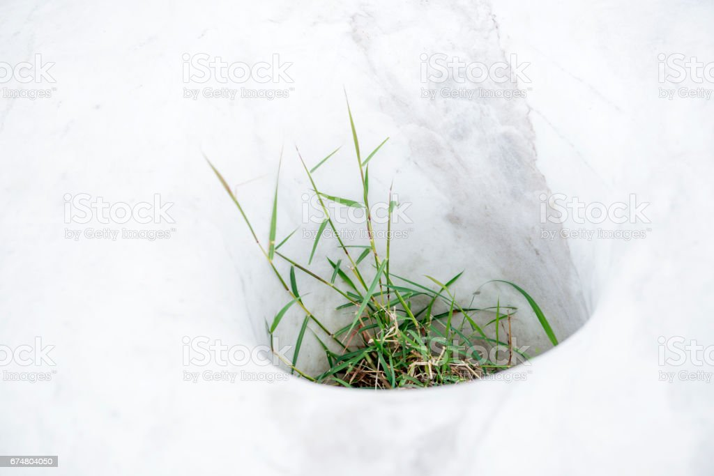 Grass and weeds growing in rock stool stock photo