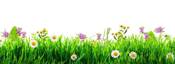 Grass and wild flowers background picture id961949570?b=1&k=6&m=961949570&s=612x612&w=0&h=k8gogfgsyynwcciuvhx0ytytr 3cxzsilcgyfiz5eug=