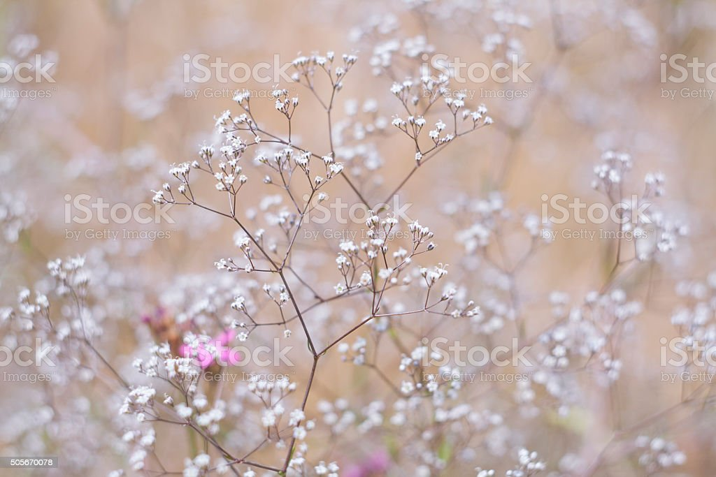 Grass and wildflowers, sunny summer meadow, selective focus royalty-free stock photo