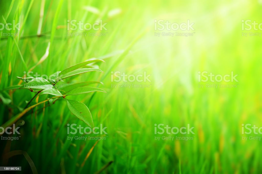 grass and young branch royalty-free stock photo
