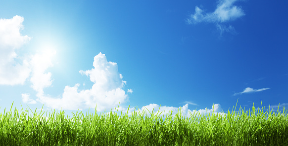 grass at sunny day