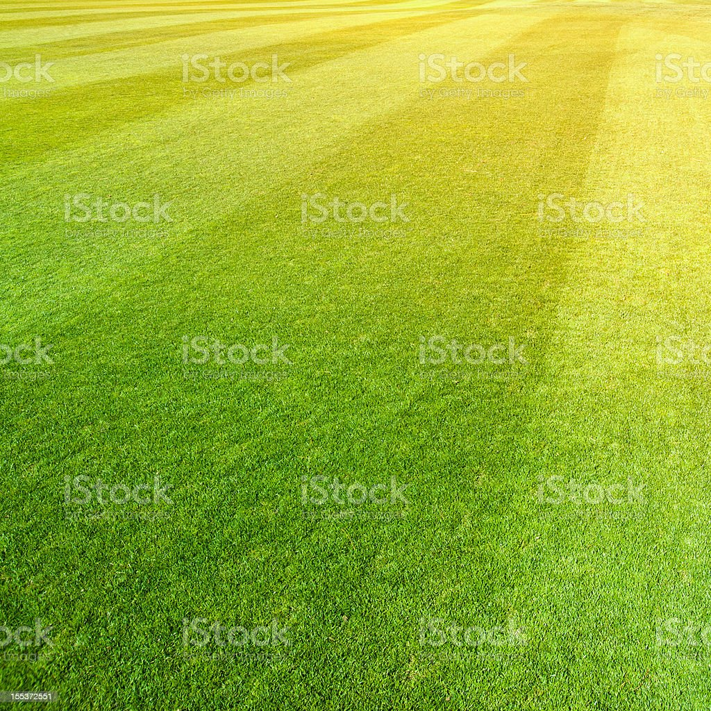 Grass at Sunset royalty-free stock photo