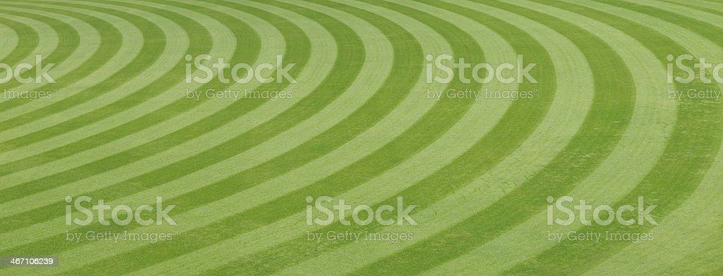 grass at the ball field. stock photo