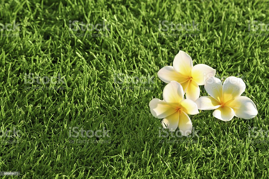 grass background & flowers royalty-free stock photo