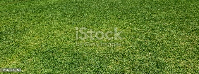 istock Grass background material [no person] 1247629159