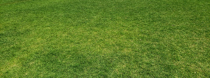 Grass background material [no person]