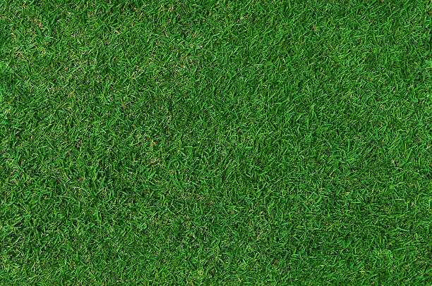 Grass Background (Seamless) stock photo
