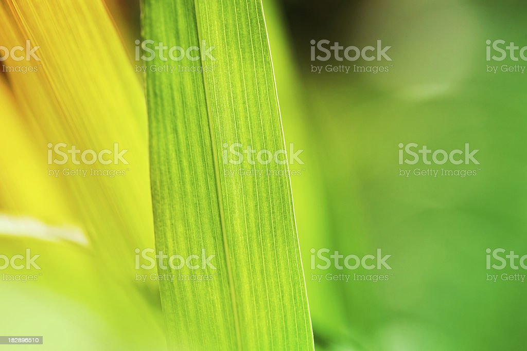 Grass background royalty-free stock photo