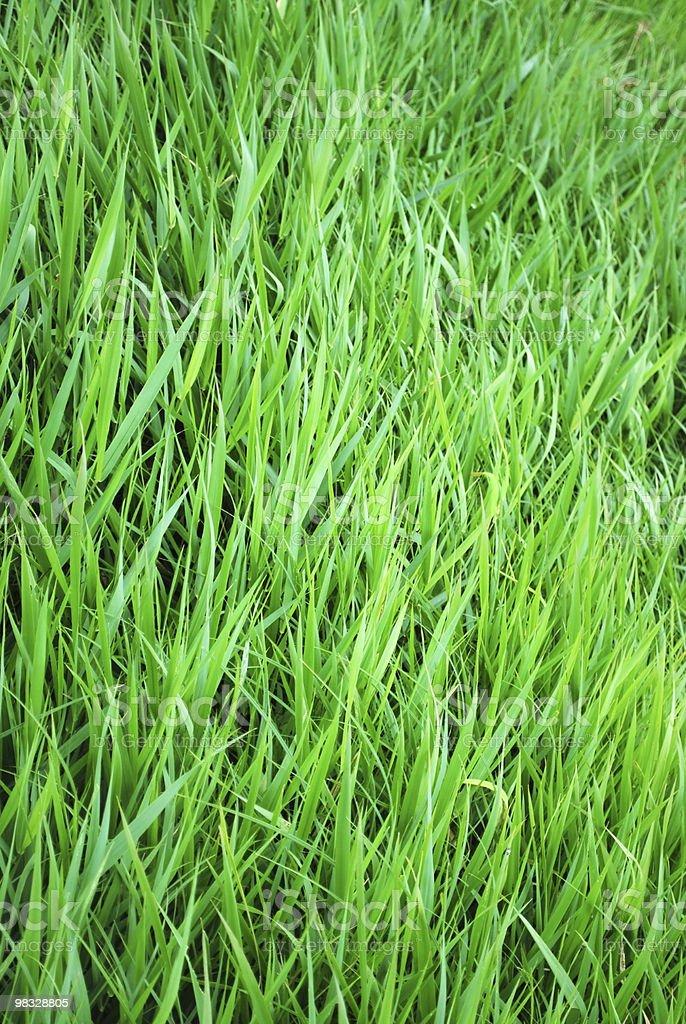잔디 배경기술 royalty-free 스톡 사진