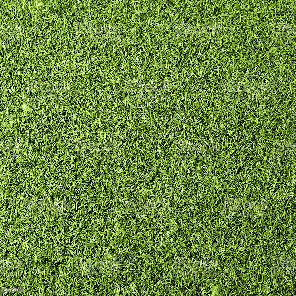 Grass background texture royalty-free stock photo