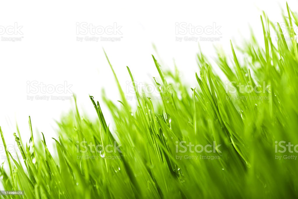 Grass Background With Rain Drops royalty-free stock photo