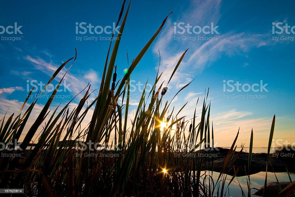 Grass backlit by beautiful sunset with sea in background royalty-free stock photo