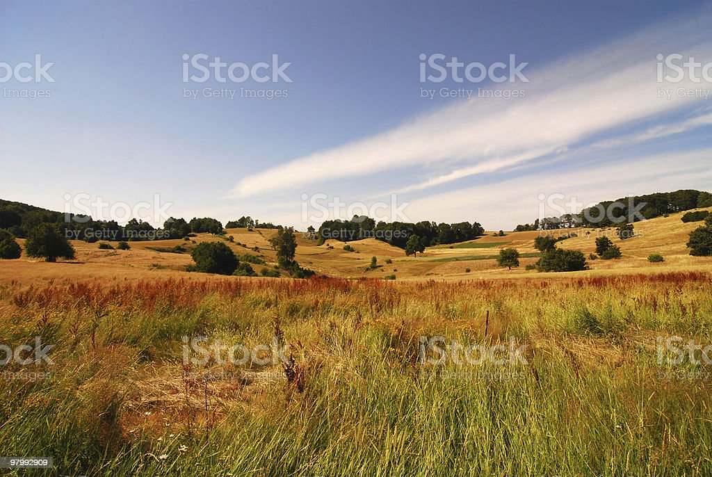 grass before mowing royalty-free stock photo