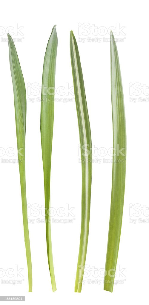 grass blades stock photo