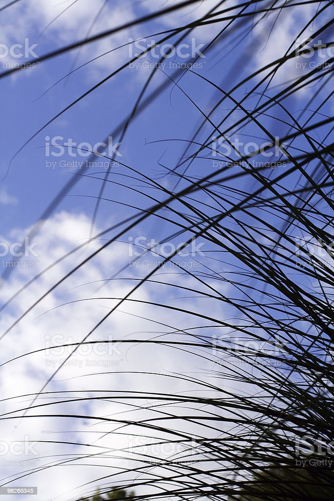 Grass blades royalty-free stock photo
