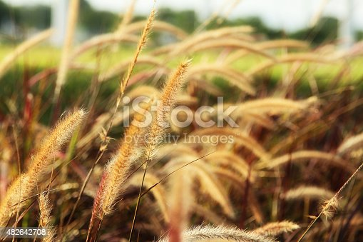 519188550istockphoto grass blurred background 482642708