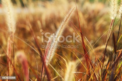 519188550istockphoto grass blurred 482633998