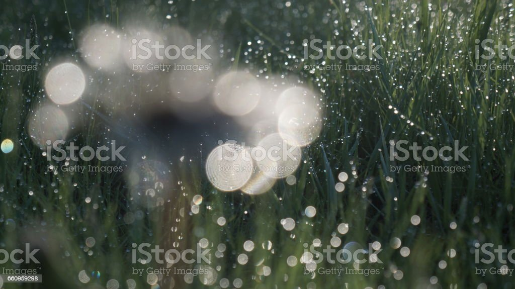 Grass Bokeh Sparkle Fresh Spring Dandelion stock photo
