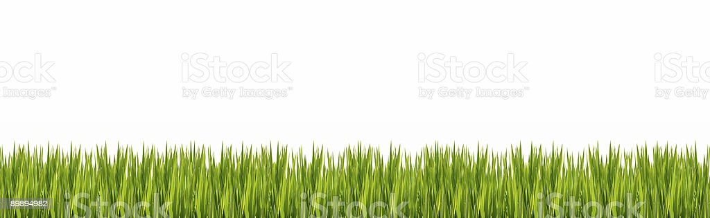 Grass border (thin leafed) 2/4 royalty-free stock photo
