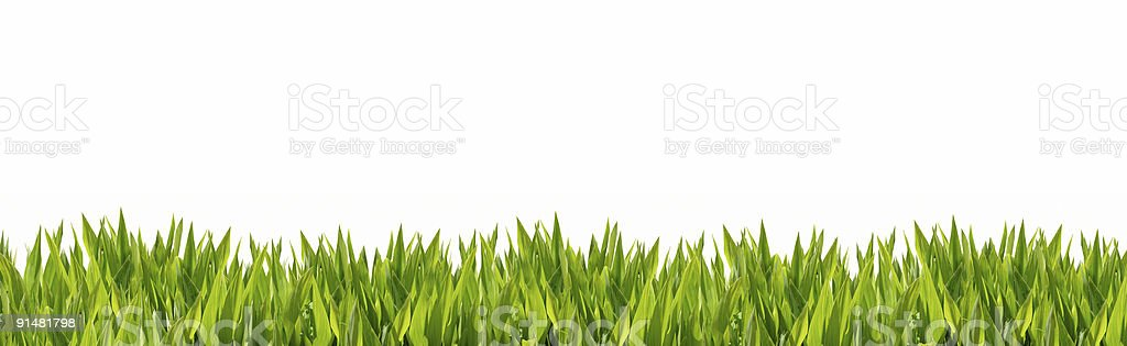 Grass border (medium thin leafed) 3/4 stock photo