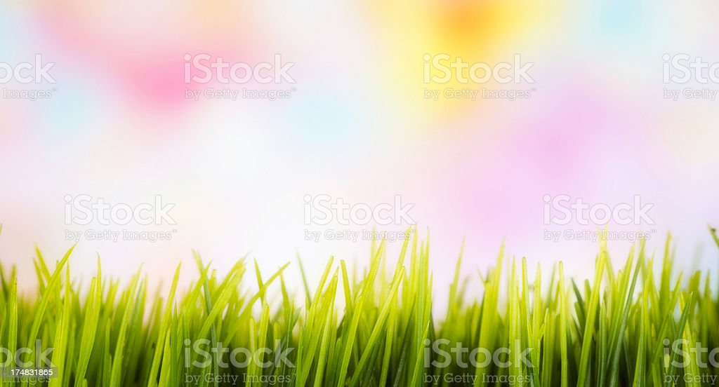 Grass Border with Colorful Background royalty-free stock photo