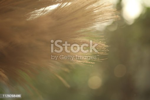 istock grass broom close up for background, 1129268486