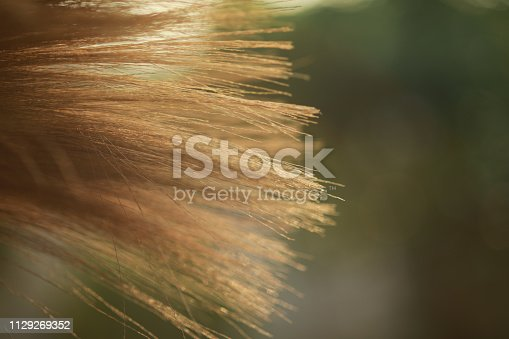 istock grass broom close up for background, 1129269352