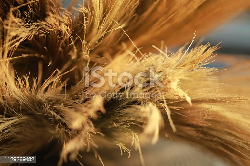 istock grass broom close up for background, 1129269482