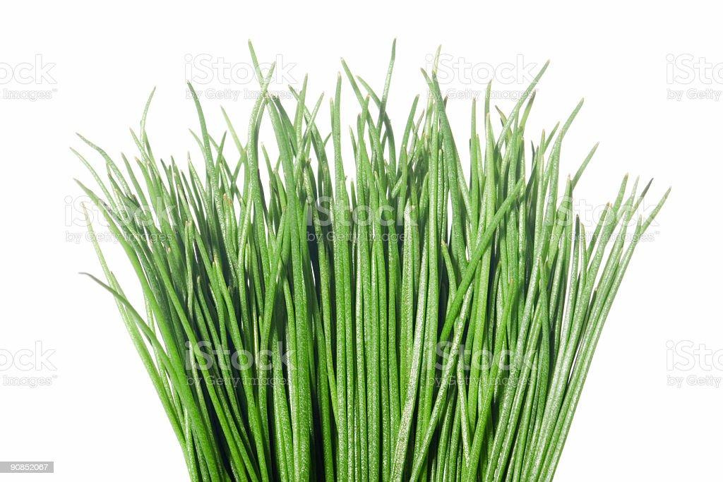 grass bunch stock photo