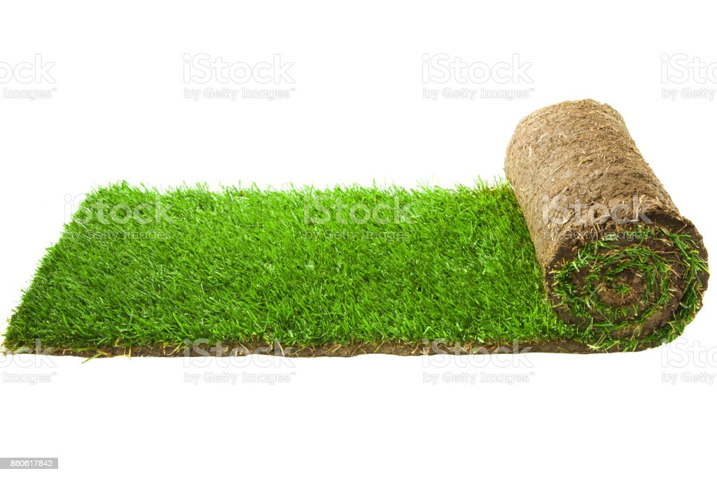 Grass Teppichrolle – Foto