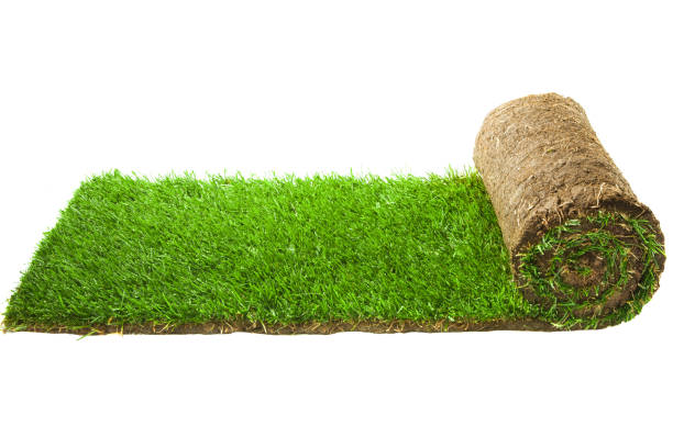 Best Turf Stock Photos Pictures Amp Royalty Free Images